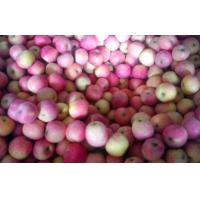 Wholesale Cold Storage Fresh Red Fuji Apple , Delicious Sweet Pome Fruit from china suppliers