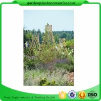Wholesale Straight Garden Bamboo Stakes For Thick Bamboo Fencing 40 X 150cm from china suppliers