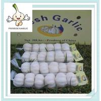 Wholesale 2016 Garlic Type and Fresh Style Chinese Natural Garlic for Wholesale from china suppliers