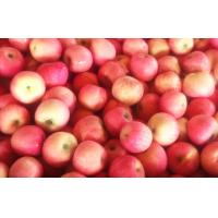 Wholesale Juicy Crisp Fresh Red Fuji Apple Quercetin / Epicatechin For Vegetable Shop from china suppliers