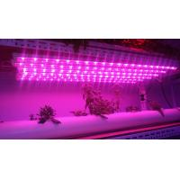 Buy cheap Led Grow Tube T810W/15W/20W 600mm 900mm 1200mm led grow lights for hydroponics culture plant 400-840nm from wholesalers