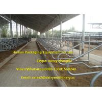 Wholesale Single Row Type Milking Cow Free Stall , 3mm Thickness Hot Galvanizing Tube from china suppliers