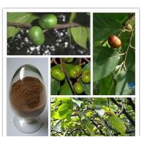 Pygeum Supplements & Products / Pygeum africanus