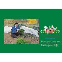 Wholesale Vegetable Garden Shade Netting , Plant Shade Cover For Garden from china suppliers