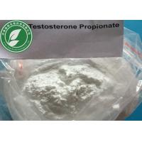 Wholesale Injection Steroid Powder Testosterone Propionate for muscle building CAS 57-85-2 from china suppliers