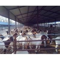Wholesale Anti Corrosive Agricultural Steel Frame Buildings Galvanized Steel Cowshed Easy Installation from china suppliers