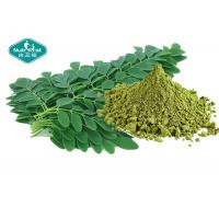 Wholesale Healthy Natural Botanical Extracts , Moringa Leaf Extract Powder For Weight Loss from china suppliers