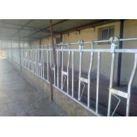 Wholesale Customized Dairy Farm Cow Head Lock For Weaning / Lactating / Dry Calf from china suppliers