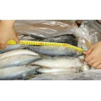 Buy cheap Frozen mackerel whole round frozen makerel price for sale from wholesalers