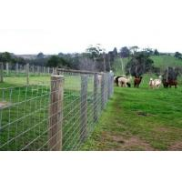 Wholesale Cattle Vinyl Coated Field Wire Fence , Stainless Steel Wire Netting from china suppliers
