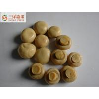 Wholesale OEM Service Organic Canned White Button Mushrooms In Brine Taste Salty from china suppliers