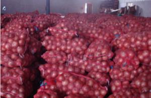 Wholesale 7cm Natural Fresh Onion from china suppliers