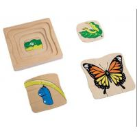 Wholesale Montessori Materials - Life Cycle of Butterfly  Dimension: 18*18*2cm from china suppliers