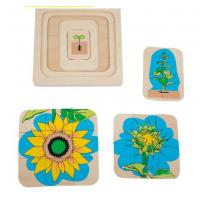 Wholesale Montessori Materials - Life Cycle of Sunflower Dimension: 18*18*2cm from china suppliers
