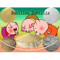 Wholesale Off white Microecologics Bacillus Subtilis Probiotic Feed Additives SEM-BS20BI from china suppliers