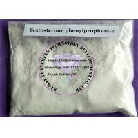 Wholesale Muscle Mass Steroids Test Phenylpropionate , Testosterone Phenylpropionate CAS 1255-49-8 from china suppliers