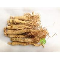 Wholesale Panax Ginseng P.E., Ginsenosides 20%HPLC, Ginseng root Extract, enhance immunity,Anti aging,Chinese manufacture from china suppliers