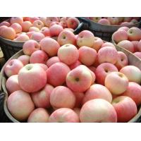 Wholesale Shandong Yantai Red Fuji Apple Juicy Sweet With Rich Vitamin C , Iron from china suppliers