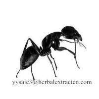 Wholesale Black Ant P.E., Polyrhachis vicina Extract,  5:1 TLC, Natural Supplement ingredients, Shaanxi Yongyuan,  Manufacturer from china suppliers