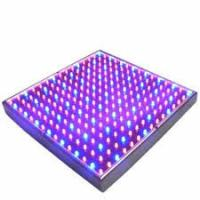 Wholesale Full Spectrum SMD Indoor LED Grow Lights 50 Watt For Breeding / Farmland , 315x310mm from china suppliers