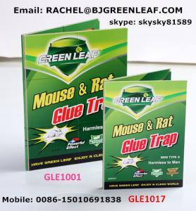 China Mouse Killer / Roach Traps (Glue trap)  SKYPE ID:skysky81589 on sale