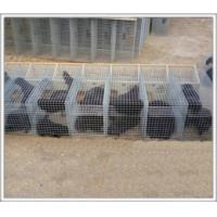 Quality Animal husbandry cages for sale