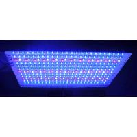 Wholesale Agricultural LED Plant Growing Lights  for indoor plants with 600 watt / 120 watt high power from china suppliers