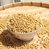 Wholesale New Crop Bulk Yellow Soybeans for Sale from china suppliers