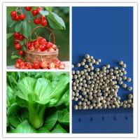 Wholesale Diammonium phosphate dap granular fertilizers agriculture from china suppliers