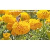 Wholesale Marigold P.E ,  Lutein  10% 20% 80%  natural colorant , antioxidant, Chinese exporter, CAS NO.: 127-40-2, eyes protect from china suppliers