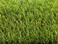 Wholesale Monofilament  Decorative forever green Artificial Grass / artificial turf from china suppliers