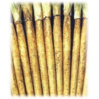 Wholesale 2012 New Burdock from china suppliers