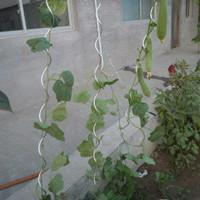 Garden planter,hot-dipped galvanized,PVC   2.5-4.0MM