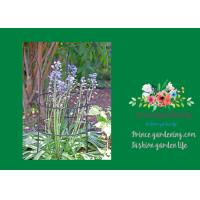 Wholesale Adjustable Metal Garden Plant Supports With 3 Stakes And 2 Rings from china suppliers