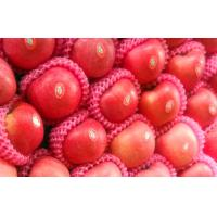 Wholesale Fresh Sweet Smell Juicy Organic Fuji Apple Thin Skin With Protein , Water from china suppliers
