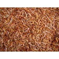 Wholesale SD Gammarus-Fish food from china suppliers