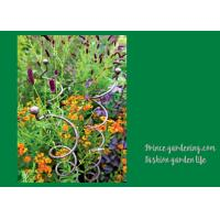 Wholesale Decorative Mental Garden Plant Stakes / Garden Support Stakes With 3 Spiral Stem from china suppliers