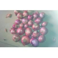 Wholesale Fresh White / Red Asian Shallots Bulbs Natural / No Pollution from china suppliers