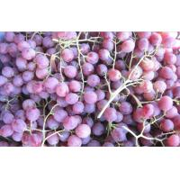 Wholesale Delicious Fresh Purple / Red Globe Grapes Health Benifits Vitamin C , K , Fluoride from china suppliers