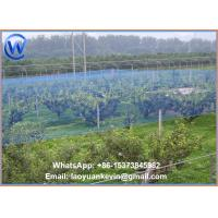 Wholesale 2m x 5m ANTI BIRD NETTING - THE VERY BEST QUALITY- FRUIT PROTECTION NET from china suppliers