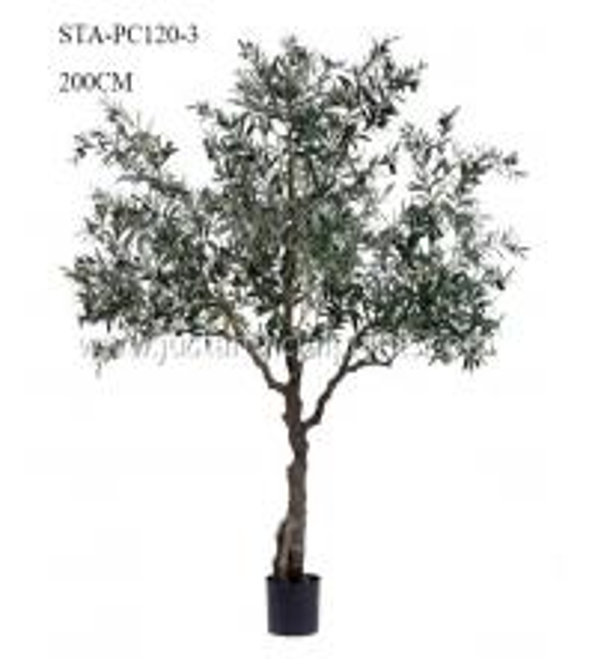 Quality Plants   Artificial Olive Tree Premium Foliage Vibrant Color 200CM No Trimming for sale