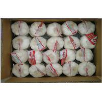 Wholesale 6.0cm Cold Store Organic Fresh Garlic No Splits For Expectorant , HACCP from china suppliers