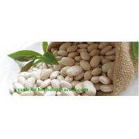 Quality White Kidney Bean Extract, Extrato de Feijão Branco,3000 Unit/g, 1%Phaseolamin,manufacturer for sale