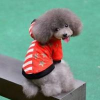 Wholesale Pet Cloth Winter, Dog Clothing USA flag from china suppliers