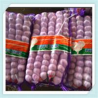 Wholesale new crop fresh pure white garlic price in china from shandong from china suppliers