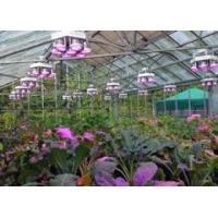 Wholesale 185W Zhongshan supplier new design Full Spectrum led plant lights A+ 3years warranty Meanwell driver aluminum /Sliver from china suppliers