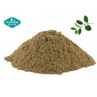 Wholesale Gymnema Sylvestre Extract Blood Sugar Supplements With 25% Gymnemic Acid from china suppliers