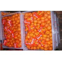 Wholesale Jiangxi Nanfeng Sweet Fresh Mandarin Oranges Juicy Contains Lutein And Zeaxanthin, pericarp thin, Orange glossy from china suppliers