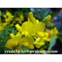 Wholesale Cytisine 99%HPLC White or slightly yellowish crystalline powder pure herbal ingredients from china suppliers