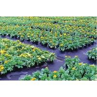 Buy cheap Durable and cheap pp non woven weed mat fabric roll from wholesalers